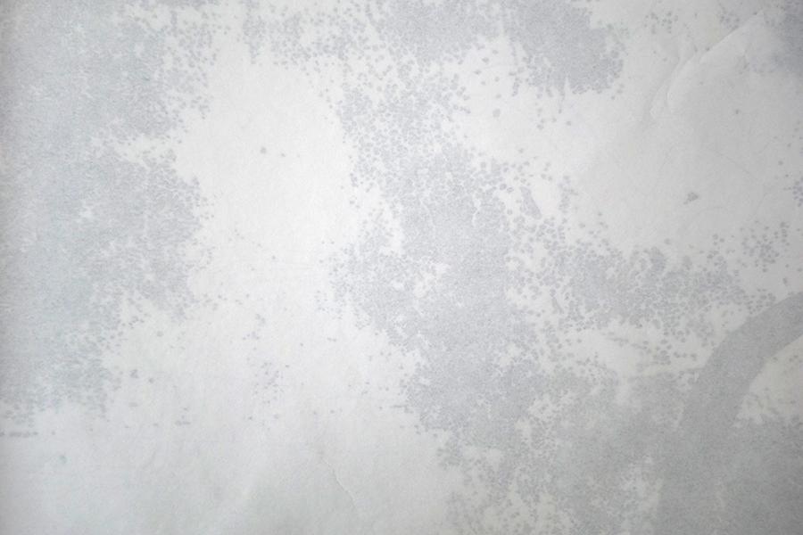repro-web-Jessica-M (4)